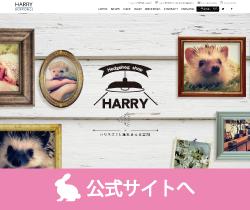 HARRY(ハリネズミカフェ)