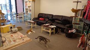 猫まるカフェ店内02