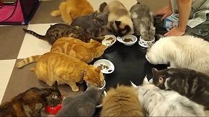 猫まるカフェ店内03