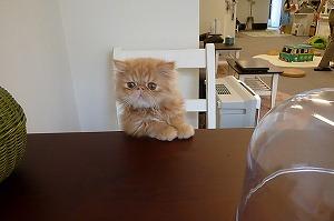 猫まるカフェ店内04