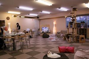 CatCafeねころび店内02