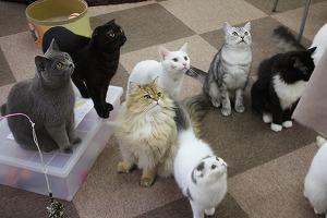 CatCafeねころび店内03