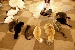 CatCafeねころび店内04